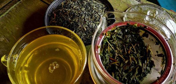чай мате и матча разница